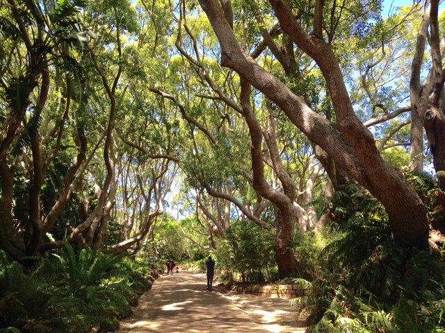 Botanical Gardens in Cape Town