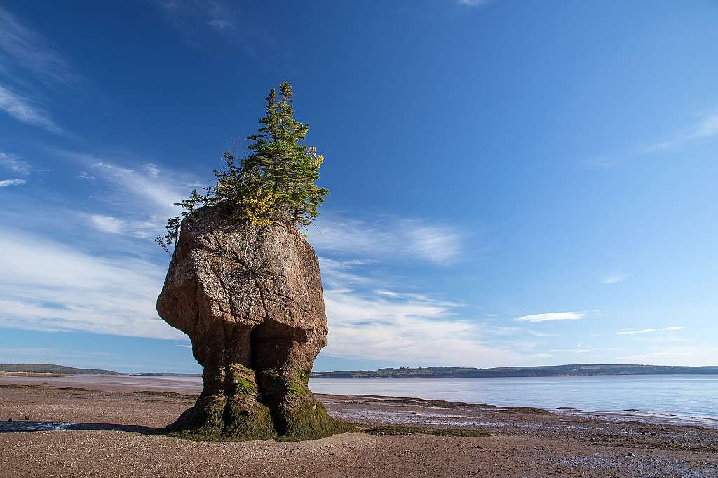 Hopewell Rocks - Flower Pot