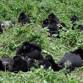 Volcanoes und Virunga National Park