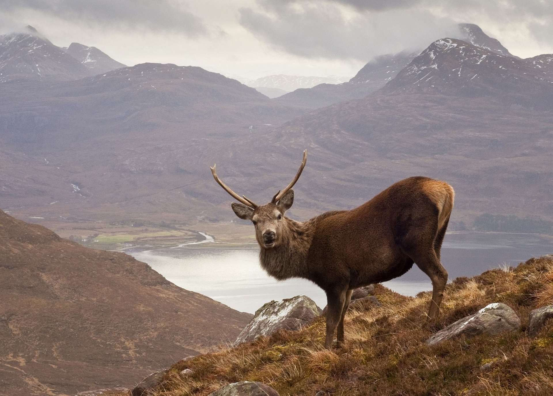"Wester Ross: ""The Monarch of the Glen"" on Loch Torridon"