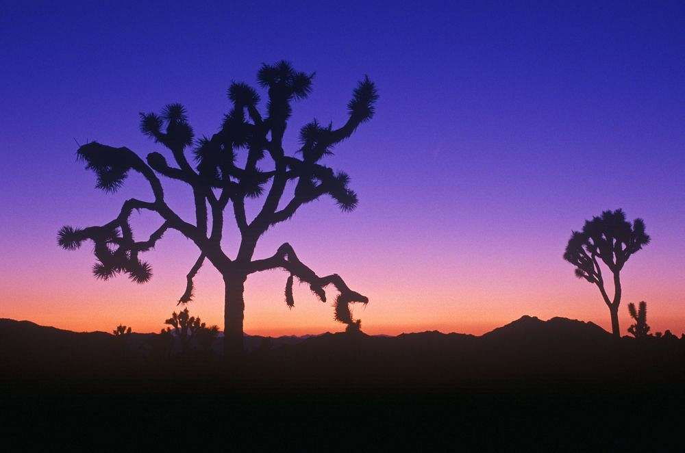 Faszinierende Urlandschaft: Joshua Tree National Park