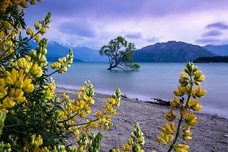 Lake Wanaka, Otago, Südinsel