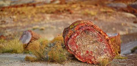 Petrified-Forest-Nationalpark