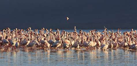 Lake Manyara-Nationalpark