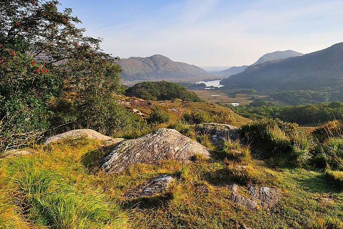 Aussicht über den Killarney Park: Ladies' View