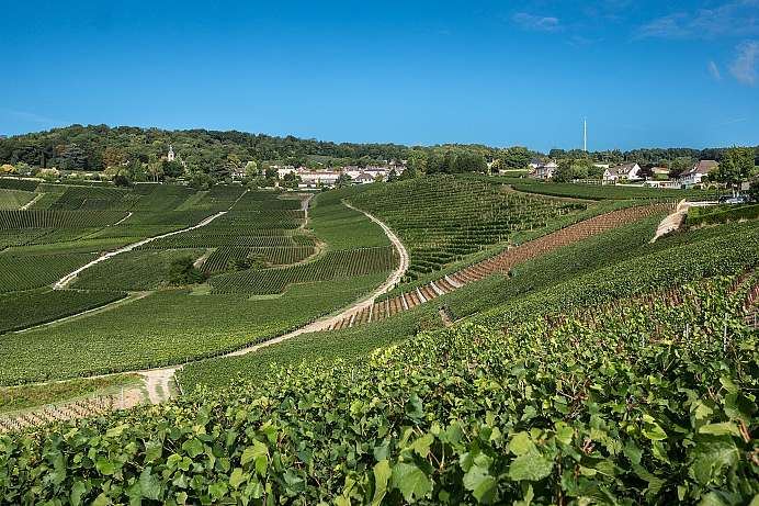 Birthplace of the Champagne: Vineyards around Hautvillers