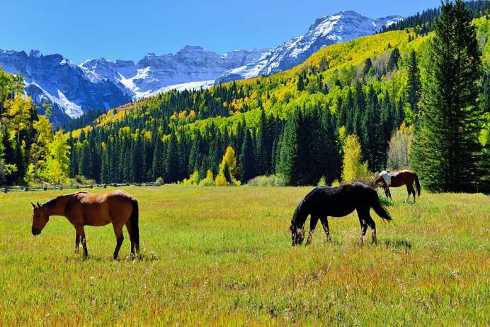 Land der Mustangs; Chilcotin Mountains