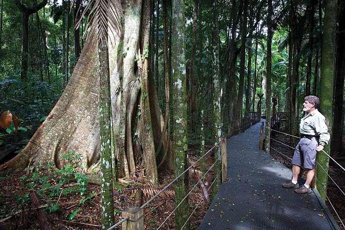 Rainforest Cafe Port Macquarie Nsw