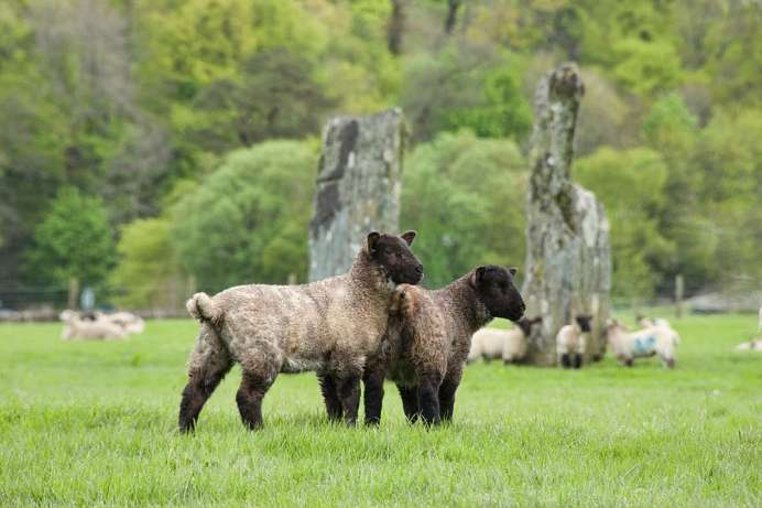Sheep, standing stones and solitude: Argyll