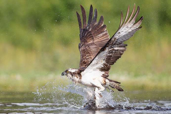 A refuge for ospreys: Parque Natural do Sudoeste