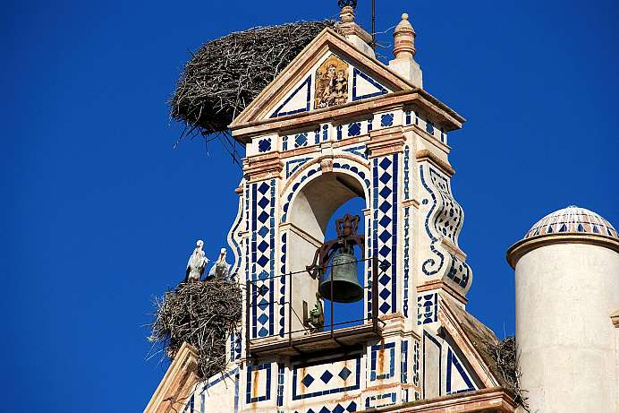 Storks in the city of towers: Écija
