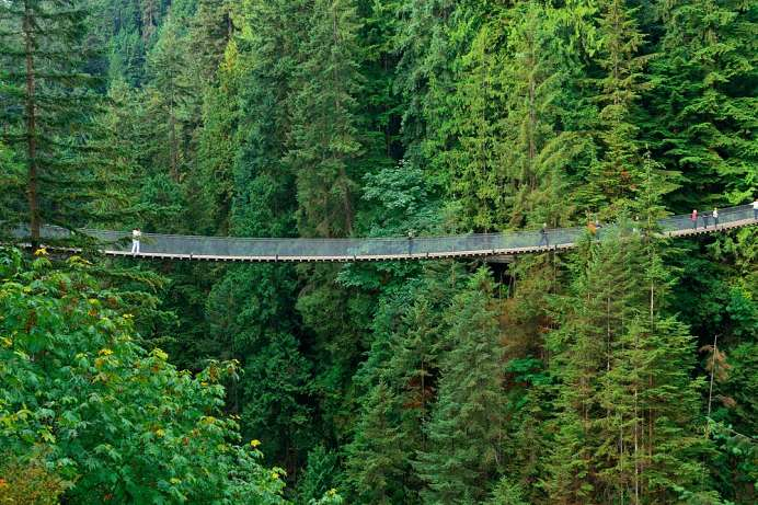 Seilbrücke über den Canyon: Capilano Suspension Bridge