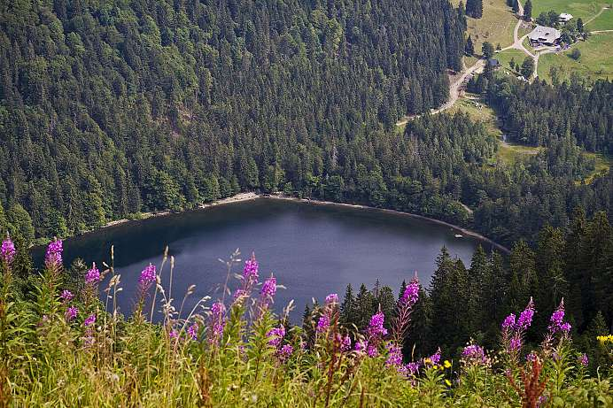 View from the Feldberg to the Feldsee