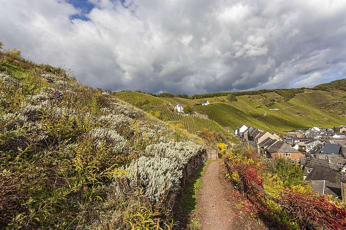 Diverse hiking trail: Moselsteig