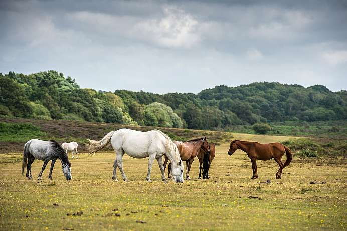 Im Norden von New Forest National Park
