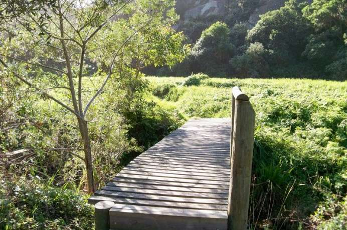 Gardenroute Idyll: Brown Hooded Kingfisher Trail