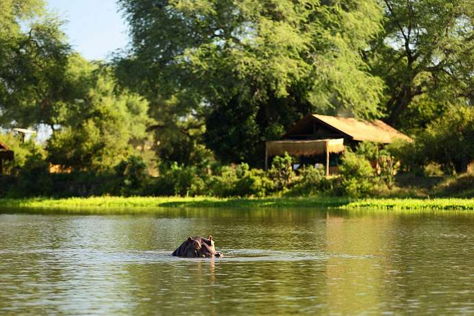 Chongwe River Camp: Flusspferde in Sicht