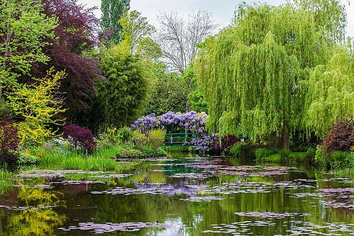 Living colour: Monet's garden