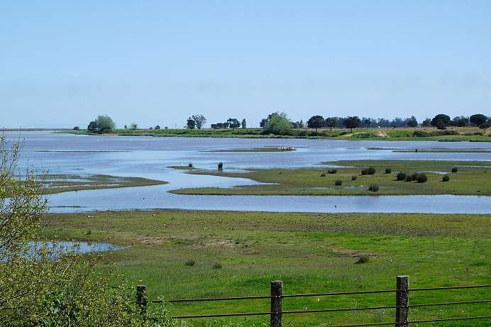 Nature reserve: Wetlands of Coto de Doñana