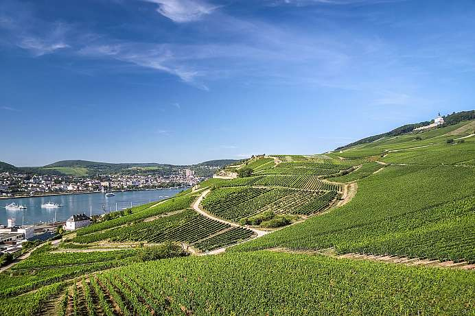 Vineyards near Rüdesheim: Rheingau