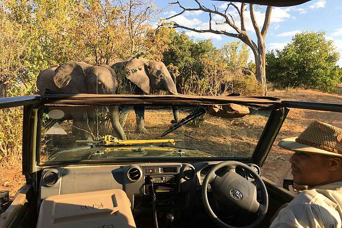 Elephant Valley Lodge: Exkursion in den Chobe Park