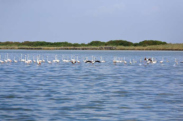 Paradise for water birds: Nature Reserve in the Po Delta