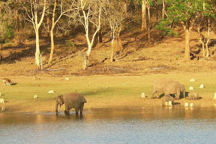 Nagarhole Nationalpark
