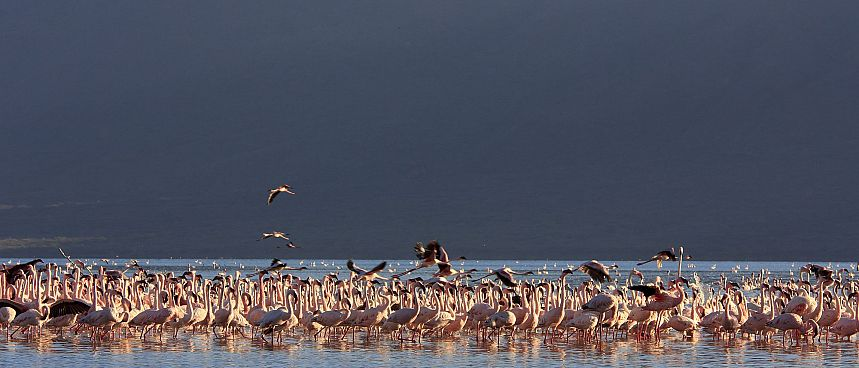 Vogelparadies: Lake Naivasha