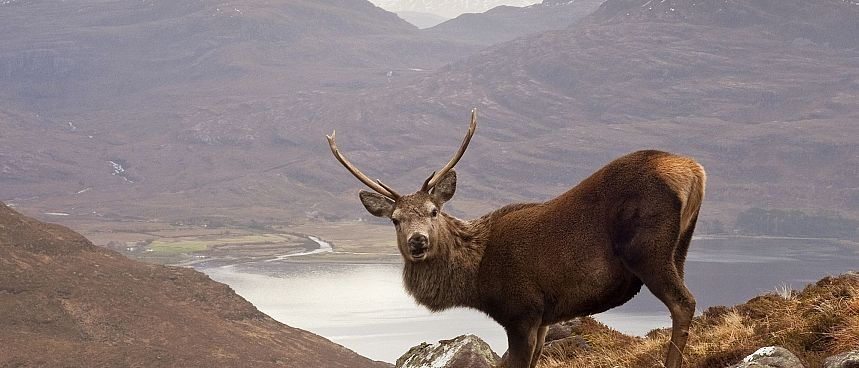 "Wester Ross: ""The Monarch of the Glen"" am Loch Torridon"