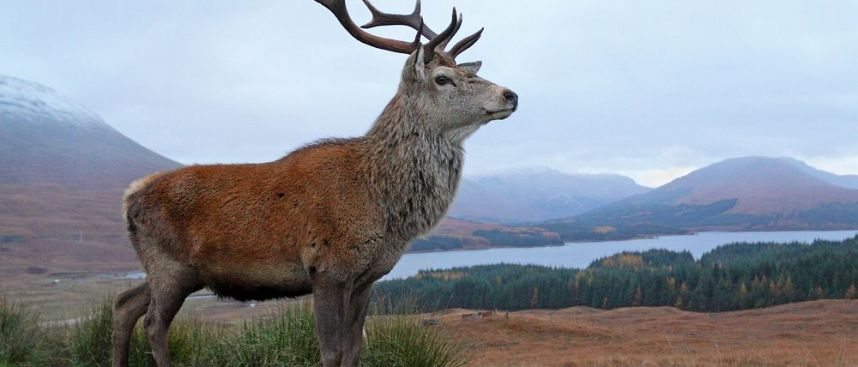 More deer than humans: Grampian Mountains