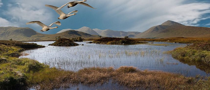 Ponds and peat swamps: Rannoch Moor