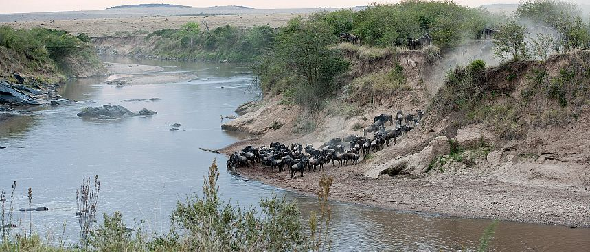 Nördliche Serengeti: Gnu Migration am Mara Fluss