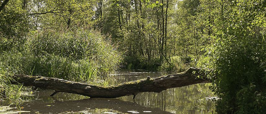 Enchanting water world: Spreewald